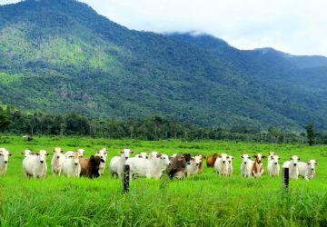 Desempenho exportador das carnes em outubro de 2020
